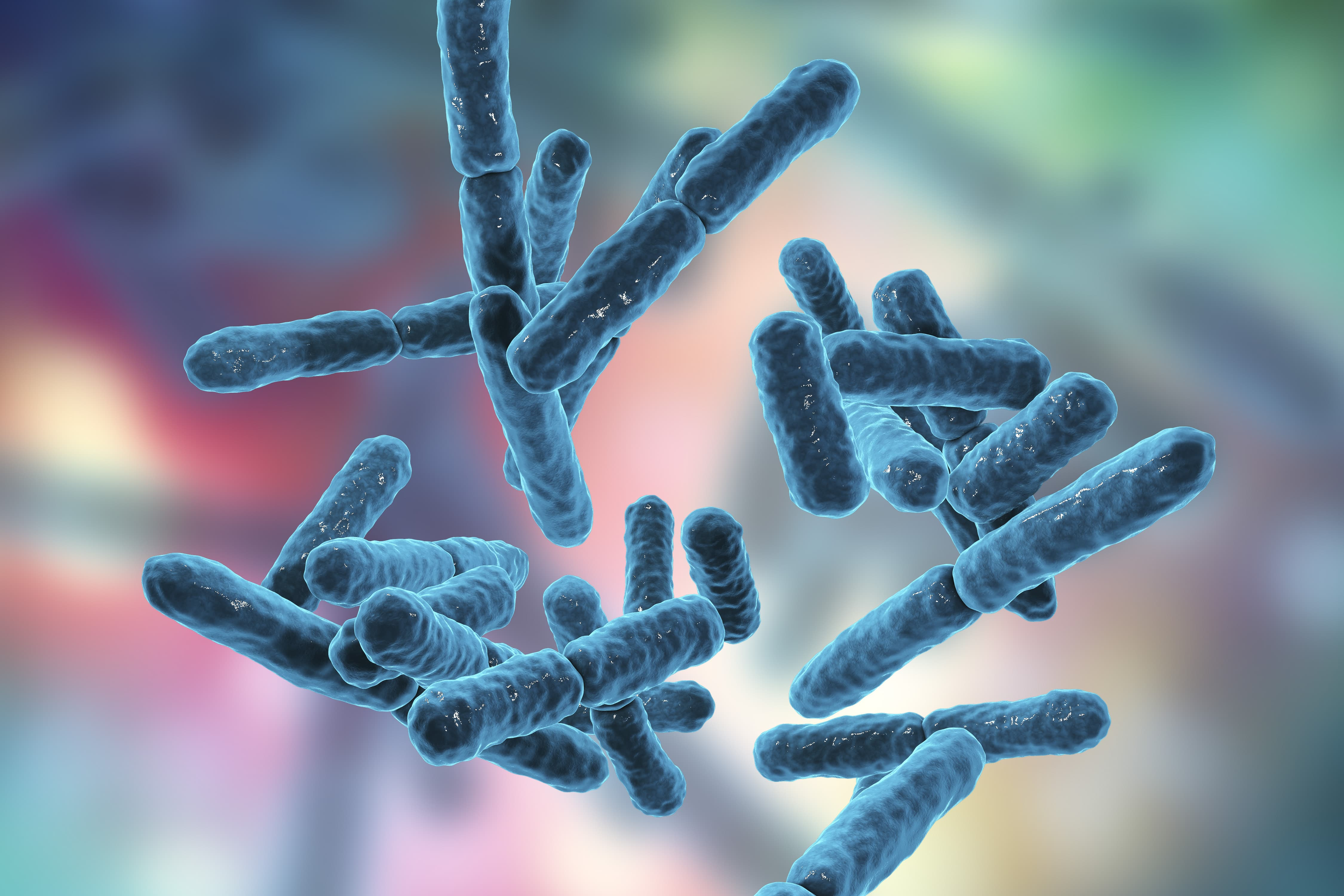Bacteria Bifidobacterium, gram-positive anaerobic rod-shaped bacteria which are part of normal flora of human intestine are used as probiotics and in yoghurt production.